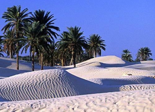 tunisko-oaza